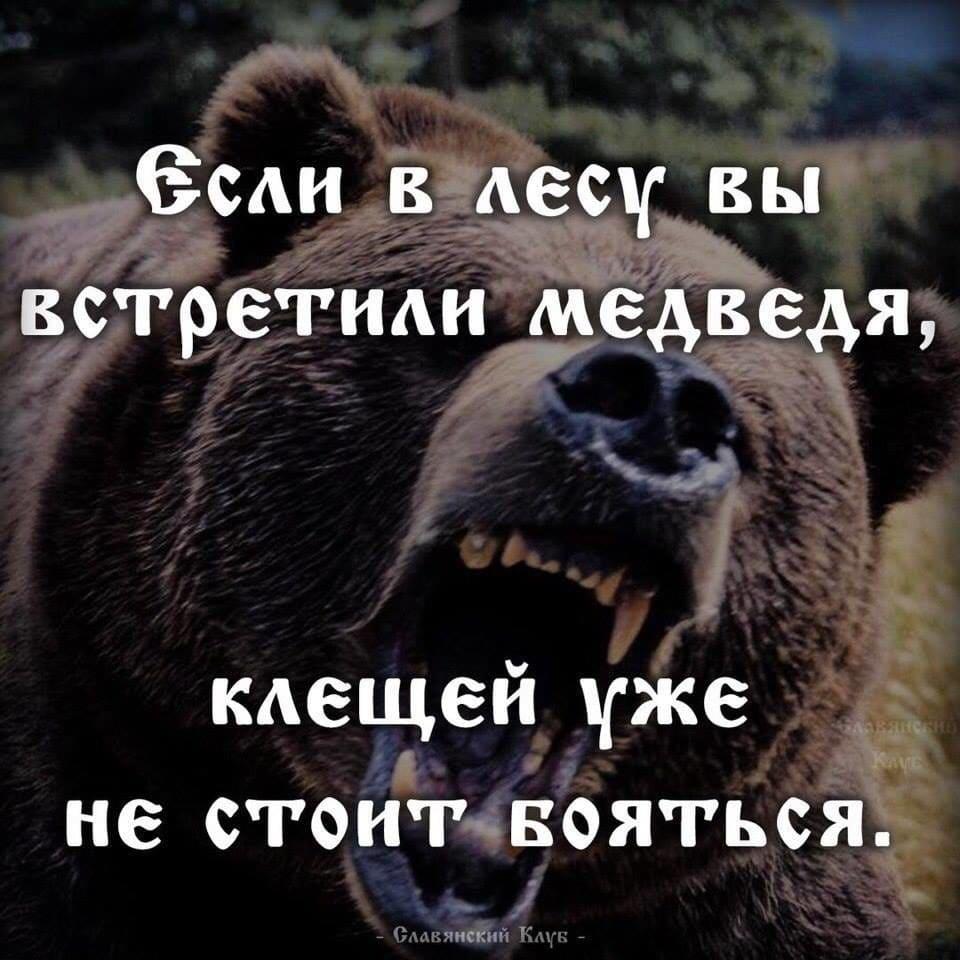 В лесу медведь