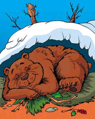 спячка у медведя